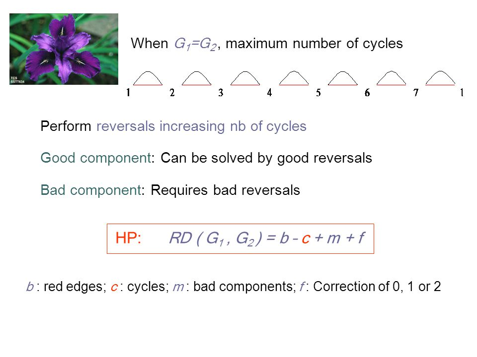 When G 1 =G 2, maximum number of cycles Perform reversals increasing nb of cycles Good component: Can be solved by good reversals Bad component: Requires bad reversals HP: RD ( G 1, G 2 ) = b – c + m + f b : red edges; c : cycles; m : bad components; f : Correction of 0, 1 or 2