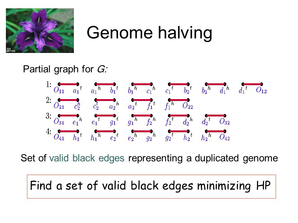 Genome halving Partial graph for G: Set of valid black edges representing a duplicated genome Find a set of valid black edges minimizing HP