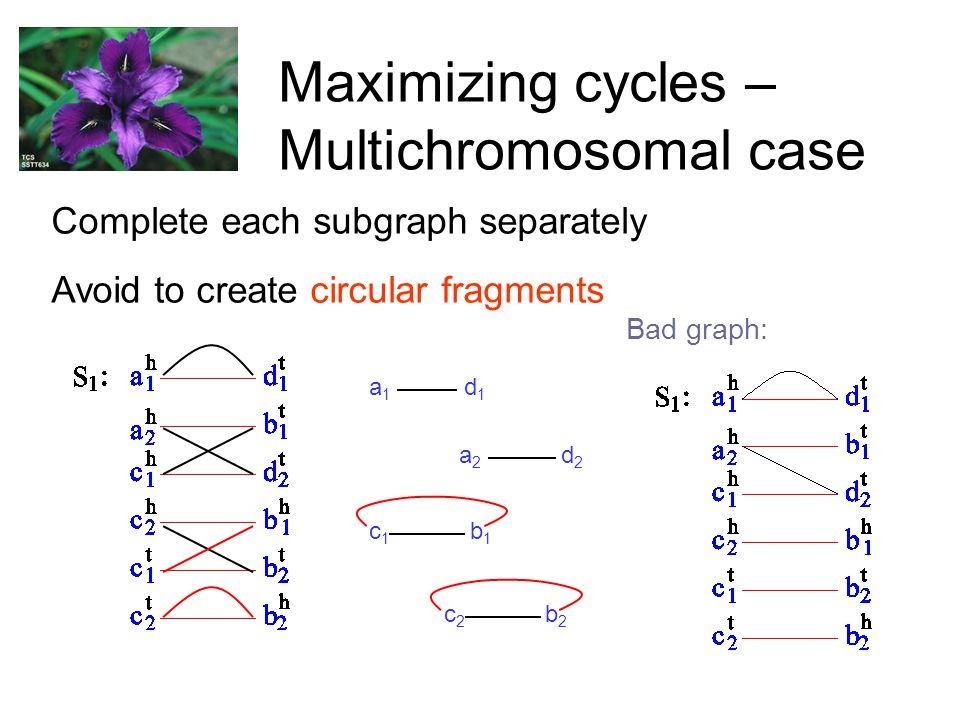 Maximizing cycles – Multichromosomal case Complete each subgraph separately Avoid to create circular fragments a 1 d 1 a 2 d 2 c 1 b 1 c 2 b 2 Bad graph:
