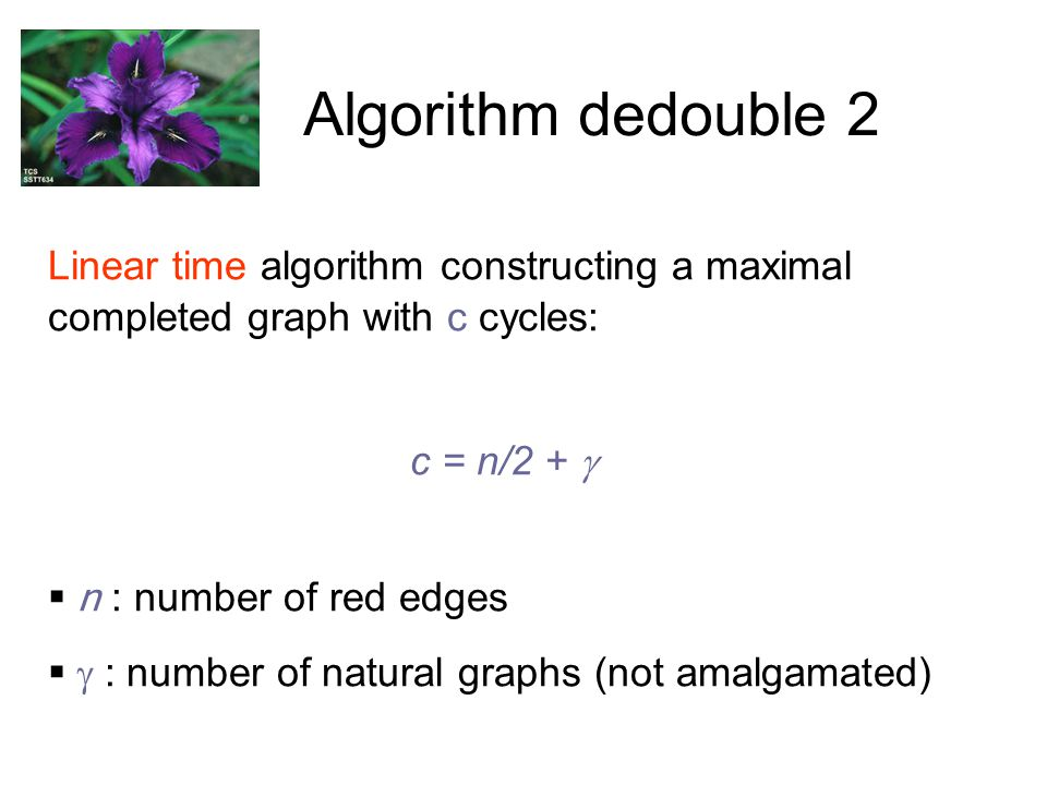 Algorithm dedouble 2 Linear time algorithm constructing a maximal completed graph with c cycles: c = n/2 +   n : number of red edges   : number of natural graphs (not amalgamated)