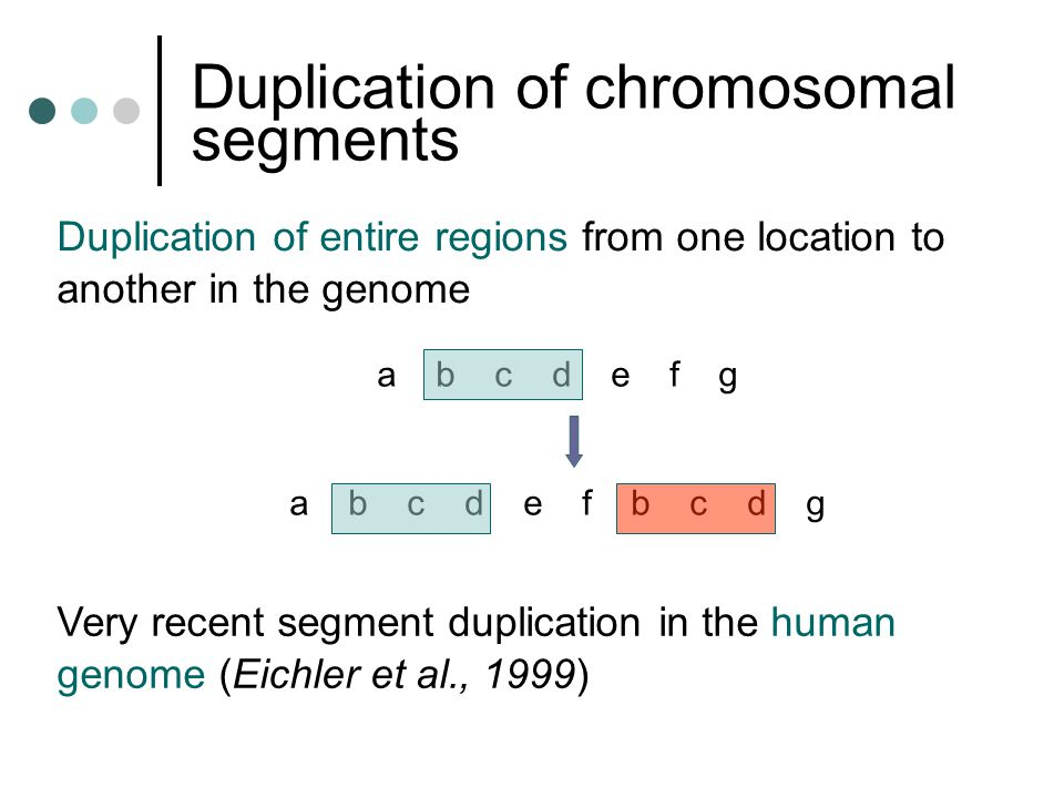Duplication of chromosomal segments Duplication of entire regions from one location to another in the genome a b c d e f g a b c d e f b c d g Very recent segment duplication in the human genome (Eichler et al., 1999)