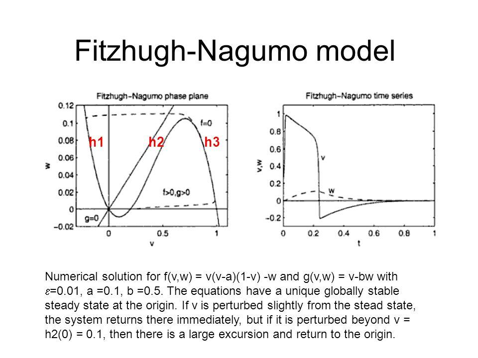 Fitzhugh-Nagumo model Numerical solution for f(v,w) = v(v-a)(1-v) -w and g(v,w) = v-bw with  =0.01, a =0.1, b =0.5.