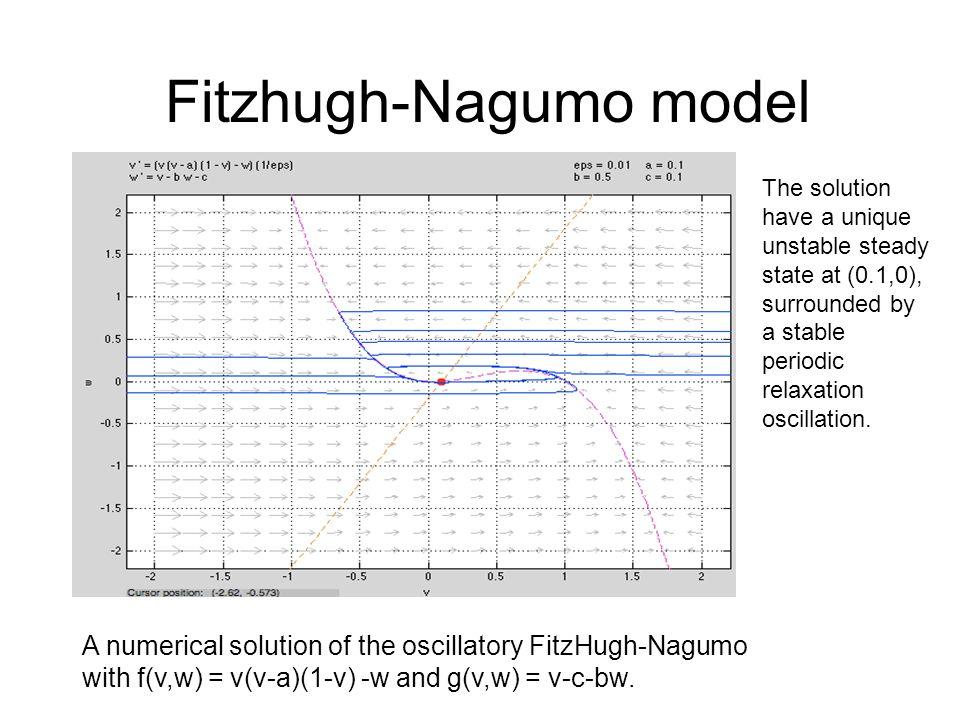 Fitzhugh-Nagumo model A numerical solution of the oscillatory FitzHugh-Nagumo with f(v,w) = v(v-a)(1-v) -w and g(v,w) = v-c-bw.