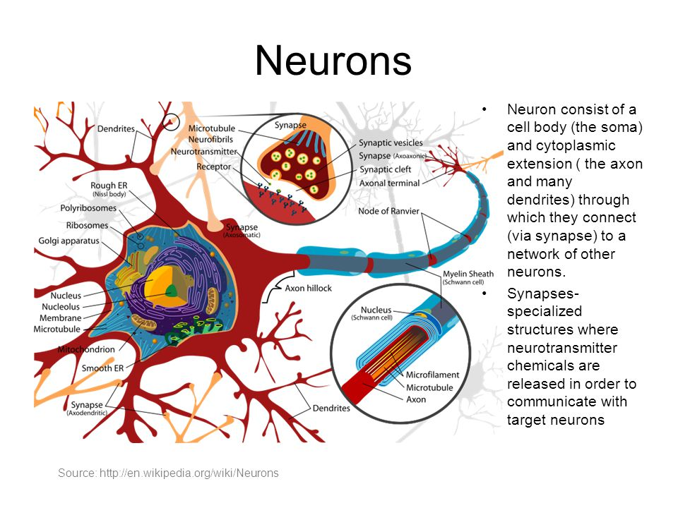Neurons Cells that have the ability to transmit action potentials are called 'excitable cells'.