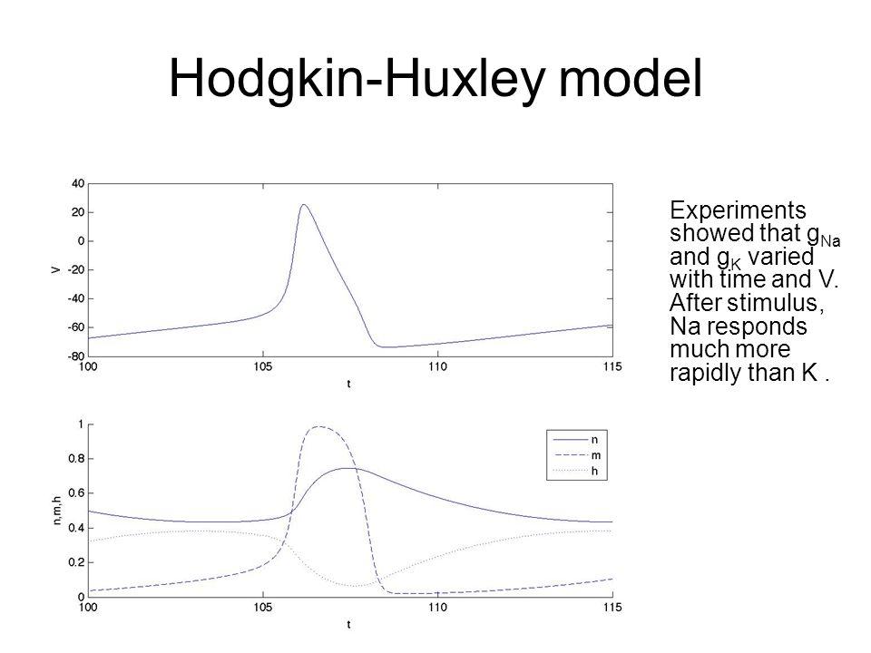 Fitzhugh-Nagumo model Fitzhugh reduced the Hodgkin-Huxley models to two variables, and Nagumo built an electrical circuit that mimics the behavior of Fitzhugh's model.