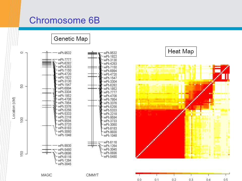 CSIRO Mathematical and Information Sciences Chromosome 6B Genetic Map Heat Map
