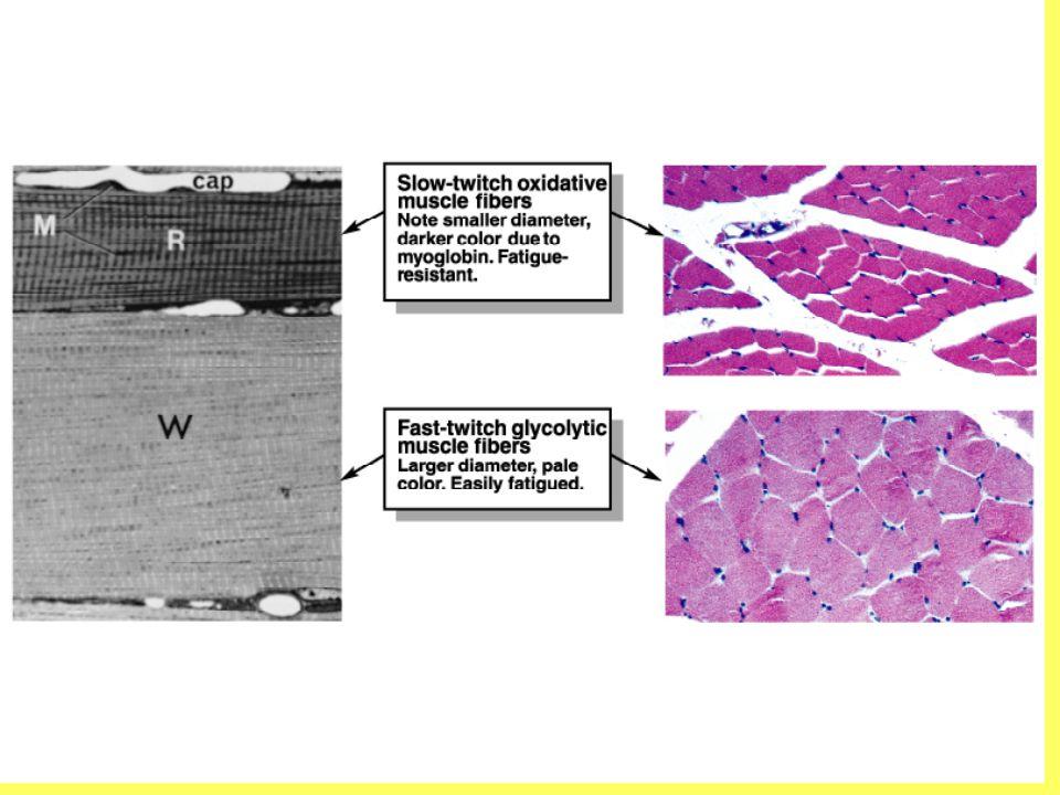 Ryanodine receptor