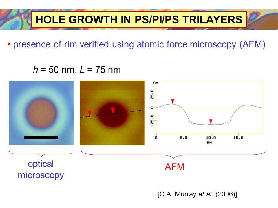 HOLE GROWTH IN PS/PI/PS TRILAYERS presence of rim verified using atomic force microscopy (AFM) optical microscopy AFM [C.A.