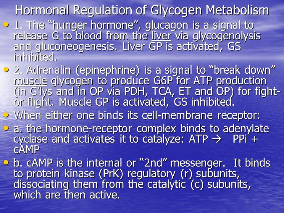 Hormonal Regulation of Glycogen Metabolism 1.