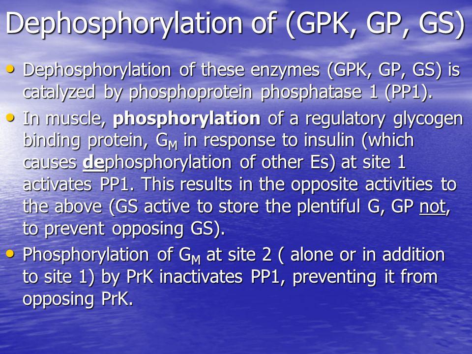 Dephosphorylation of (GPK, GP, GS) Dephosphorylation of these enzymes (GPK, GP, GS) is catalyzed by phosphoprotein phosphatase 1 (PP1).