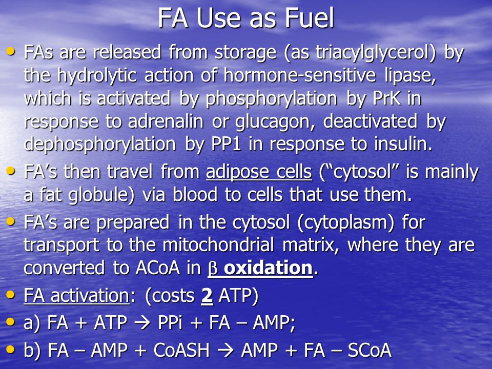 FA Use as Fuel FAs are released from storage (as triacylglycerol) by the hydrolytic action of hormone-sensitive lipase, which is activated by phosphorylation by PrK in response to adrenalin or glucagon, deactivated by dephosphorylation by PP1 in response to insulin.