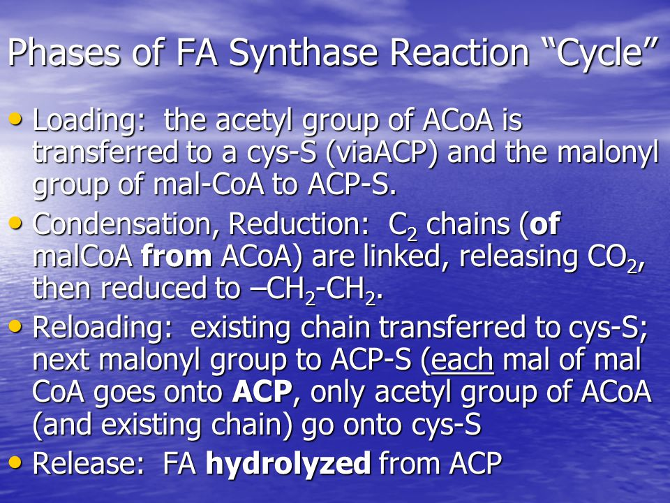 Phases of FA Synthase Reaction Cycle Loading: the acetyl group of ACoA is transferred to a cys-S (viaACP) and the malonyl group of mal-CoA to ACP-S.