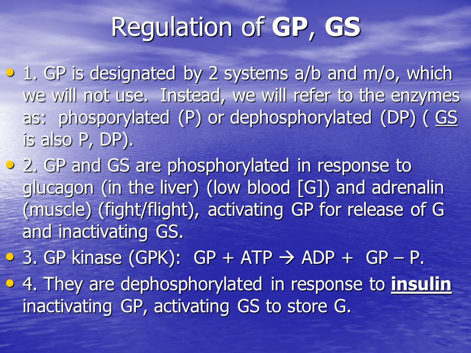 Regulation of GP, GS 1. GP is designated by 2 systems a/b and m/o, which we will not use. Instead, we will refer to the enzymes as: phosporylated (P)