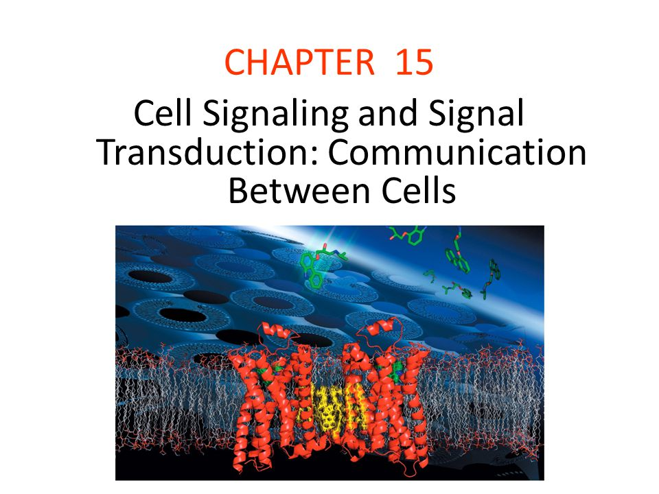 CHAPTER 15 Cell Signaling and Signal Transduction: Communication Between Cells