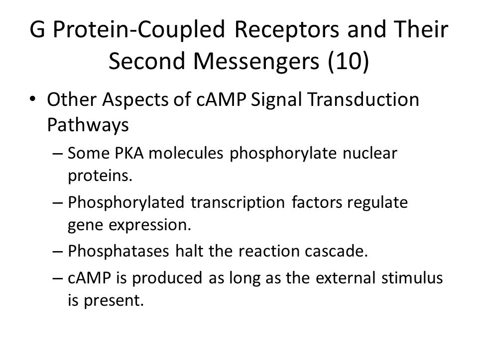 G Protein-Coupled Receptors and Their Second Messengers (10) Other Aspects of cAMP Signal Transduction Pathways – Some PKA molecules phosphorylate nuclear proteins.