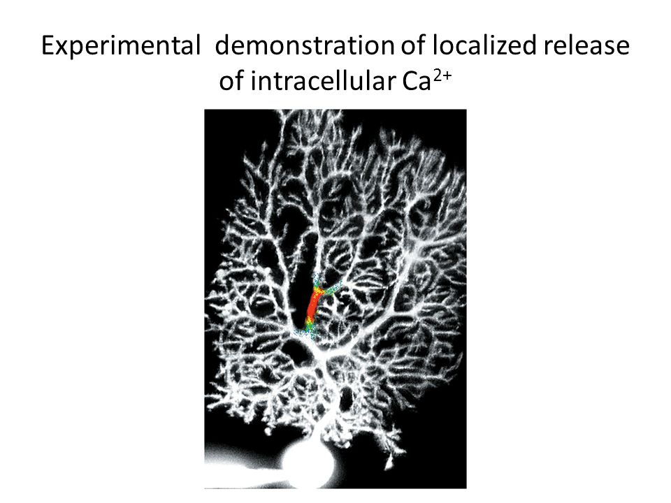 Experimental demonstration of localized release of intracellular Ca 2+