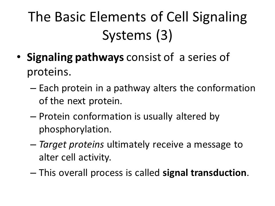 The Basic Elements of Cell Signaling Systems (3) Signaling pathways consist of a series of proteins.