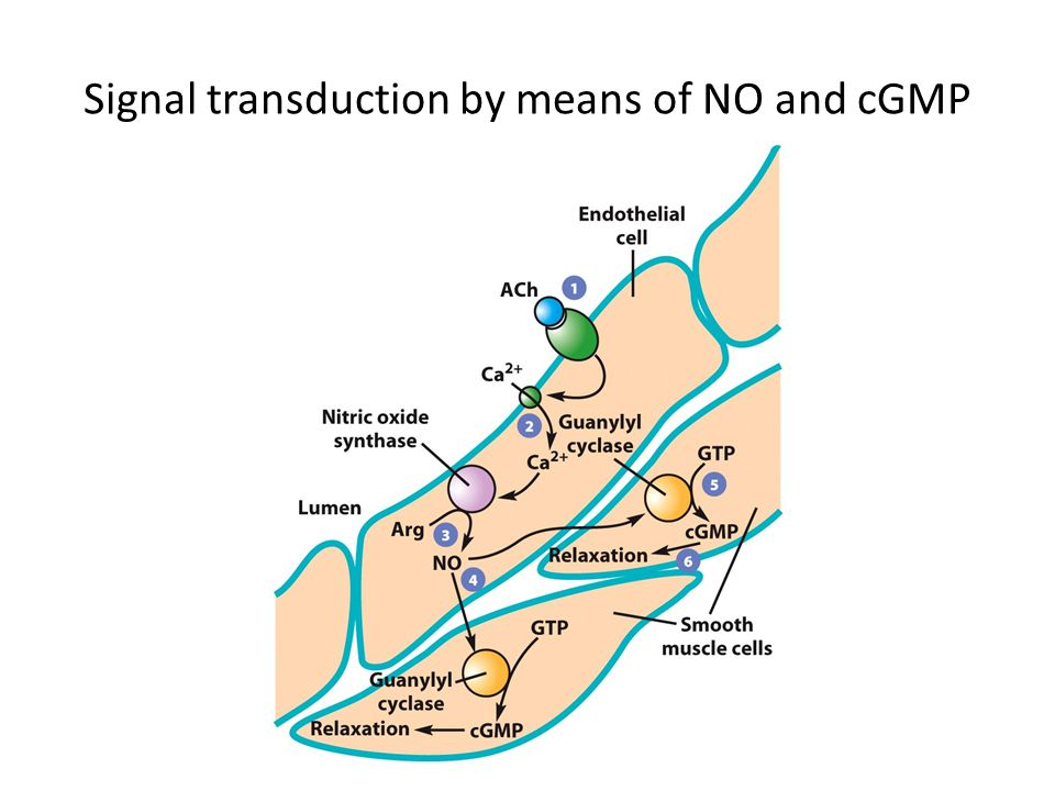 Signal transduction by means of NO and cGMP