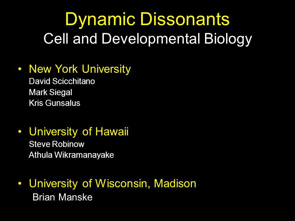 Dynamic Dissonants Cell and Developmental Biology New York University David Scicchitano Mark Siegal Kris Gunsalus University of Hawaii Steve Robinow Athula Wikramanayake University of Wisconsin, Madison Brian Manske