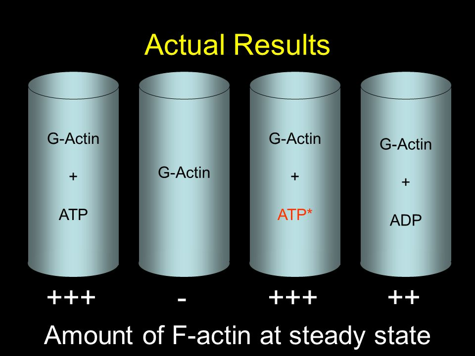 Actual Results G-Actin + ATP G-Actin + ATP* G-Actin + ADP Amount of F-actin at steady state +++- ++