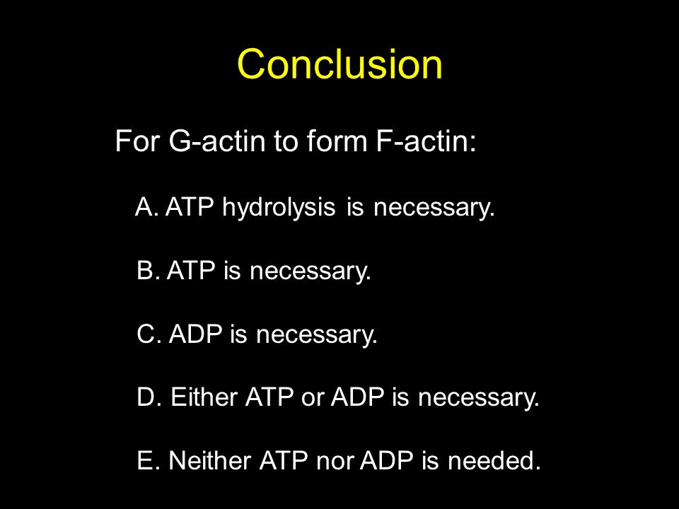 Conclusion For G-actin to form F-actin: A. ATP hydrolysis is necessary. B. ATP is necessary. C. ADP is necessary. D. Either ATP or ADP is necessary. E