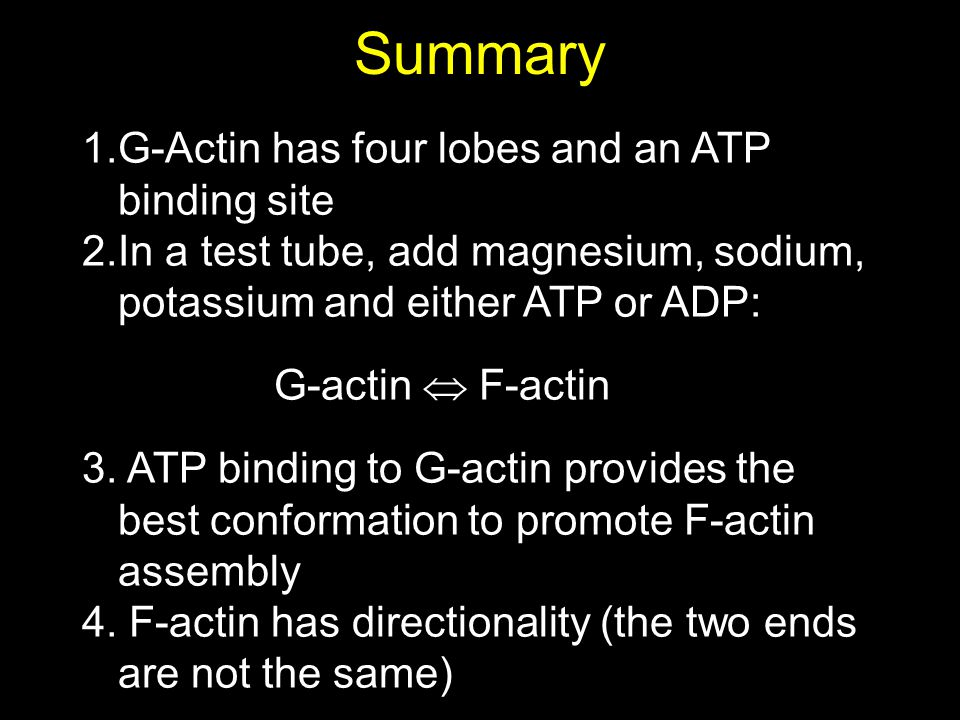 Summary 1.G-Actin has four lobes and an ATP binding site 2.In a test tube, add magnesium, sodium, potassium and either ATP or ADP: G-actin  F-actin 3