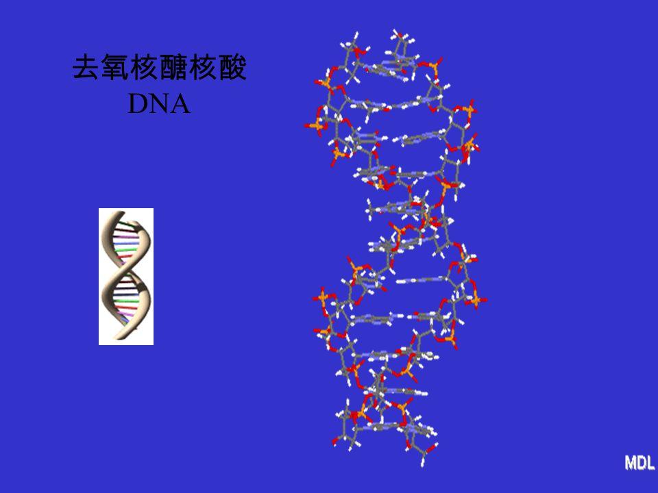 去氧核醣核酸 DNA