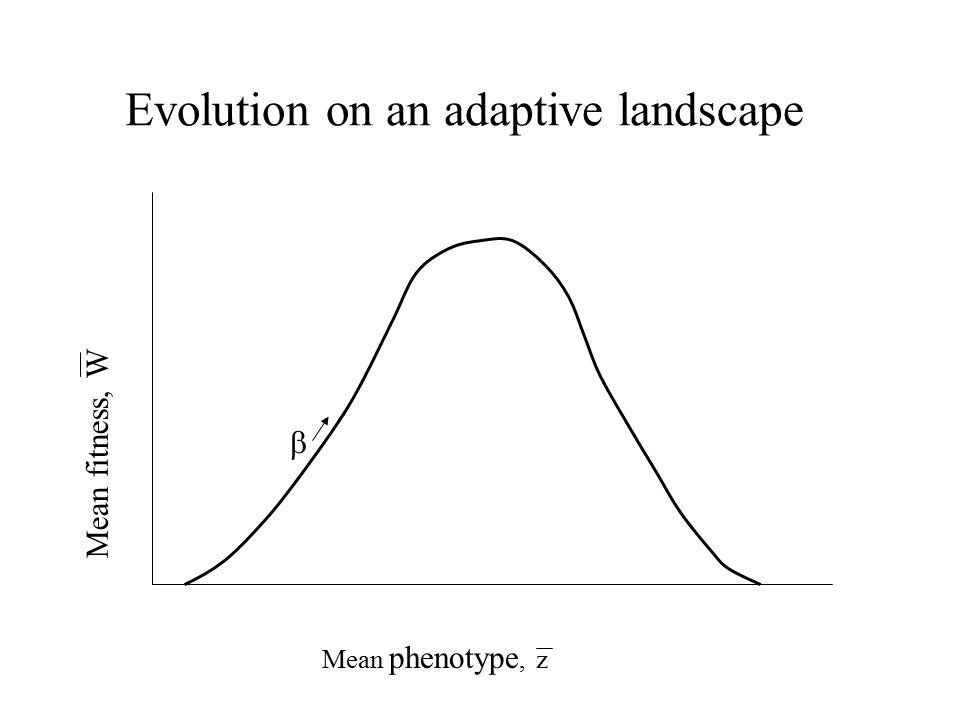 Evolution on an adaptive landscape Mean phenotype, z Mean fitness, W 