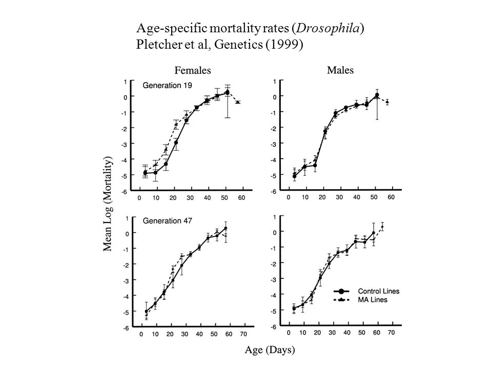 Age-specific mortality rates (Drosophila) Pletcher et al, Genetics (1999)