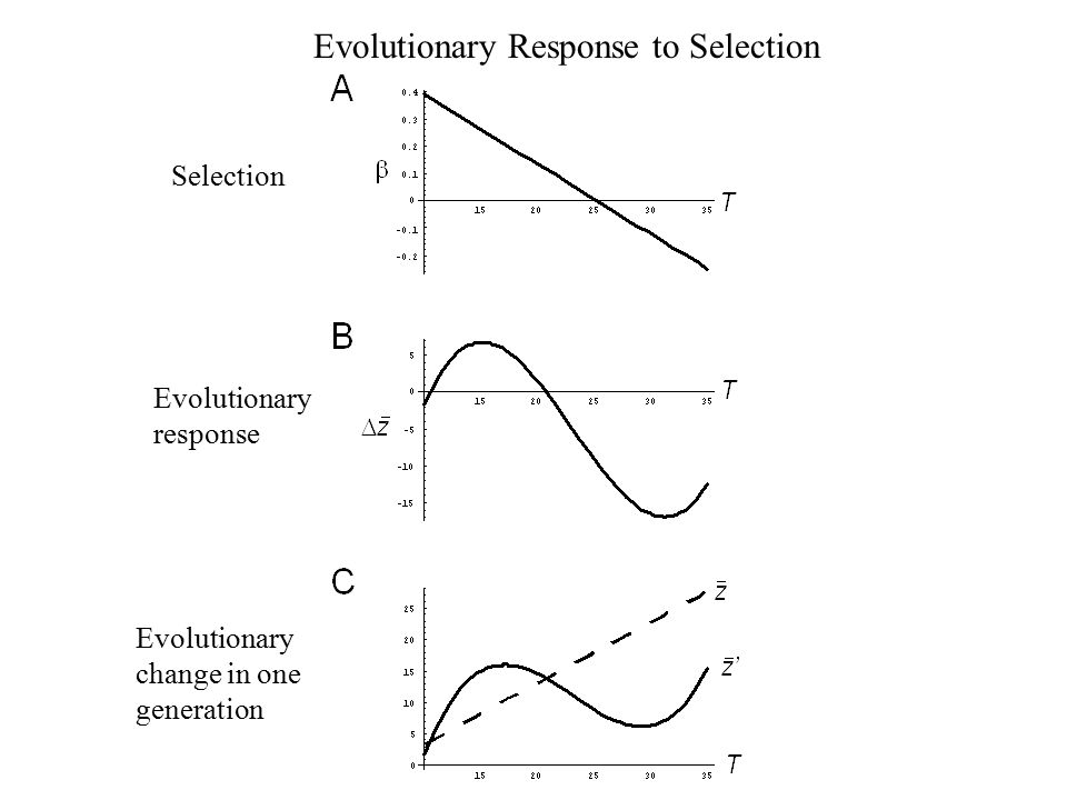 Evolutionary Response to Selection Selection Evolutionary response Evolutionary change in one generation