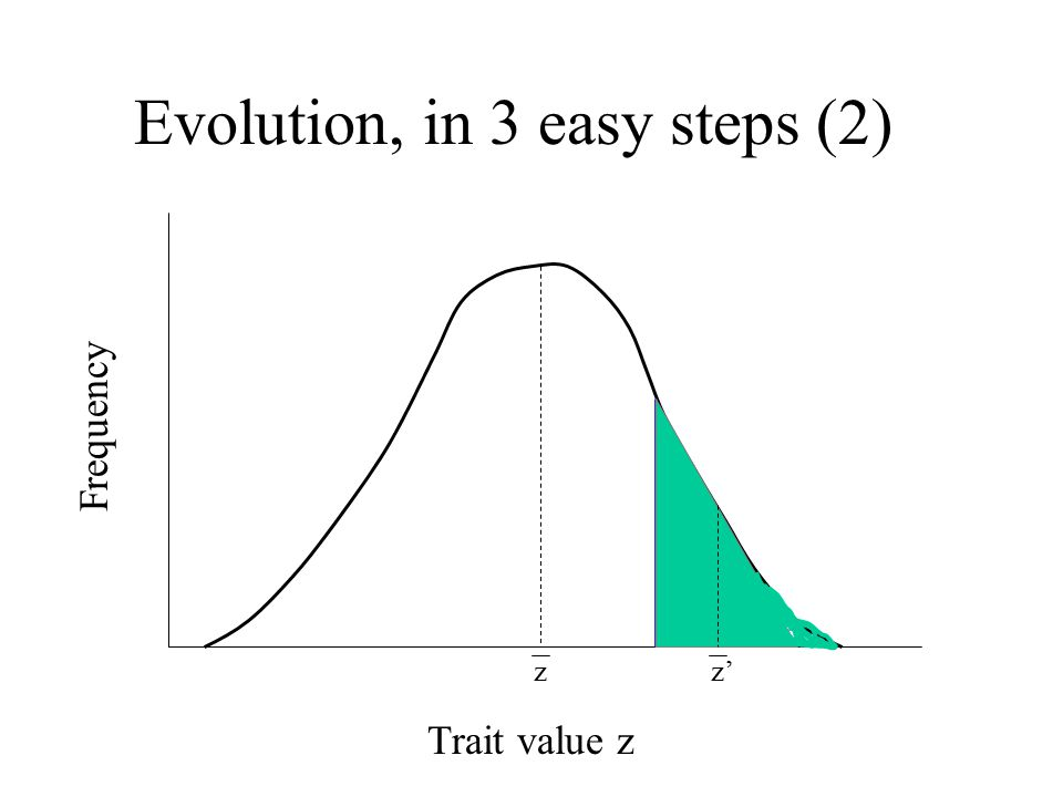 Evolution, in 3 easy steps (2) Trait value z Frequency z z'