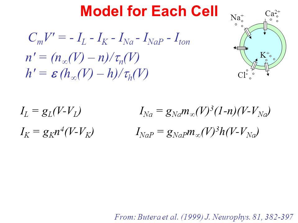 Model for Each Cell I L = g L (V-V L ) I Na = g Na m ∞ (V) 3 (1-n)(V-V Na ) I K = g K n 4 (V-V K ) I NaP = g NaP m ∞ (V) 3 h(V-V Na ) n′ = (n ∞ (V) – n)/  n (V) h′ =  (h ∞ (V) – h)/  h (V) C m V′ = - I L - I K - I Na - I NaP - I ton From: Butera et al.