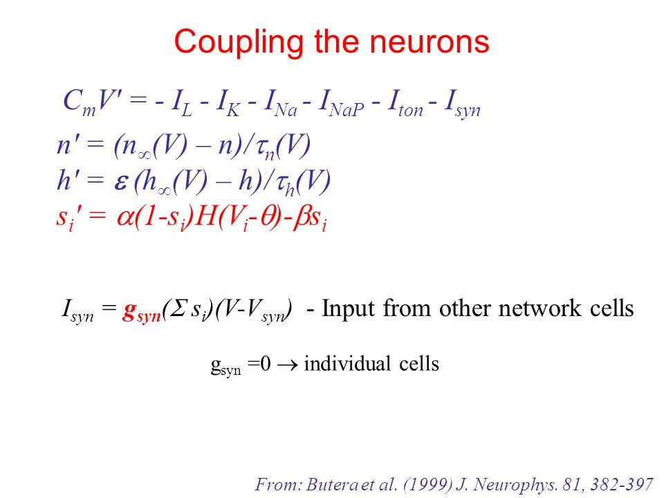 n′ = (n ∞ (V) – n)/  n (V) h′ =  (h ∞ (V) – h)/  h (V) s i ′ =  (1-s i )H(V i -  )-  s i C m V′ = - I L - I K - I Na - I NaP - I ton - I syn Coupling the neurons From: Butera et al.