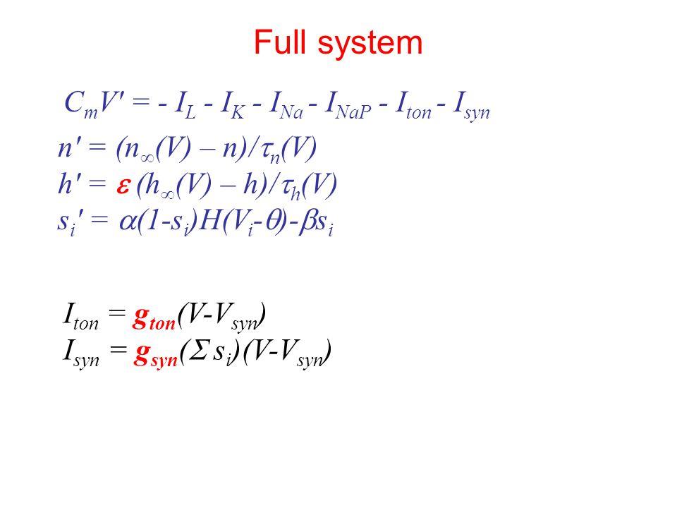 n′ = (n ∞ (V) – n)/  n (V) h′ =  (h ∞ (V) – h)/  h (V) s i ′ =  (1-s i )H(V i -  )-  s i C m V′ = - I L - I K - I Na - I NaP - I ton - I syn Full system I ton = g ton (V-V syn ) I syn = g syn (  s i )(V-V syn )