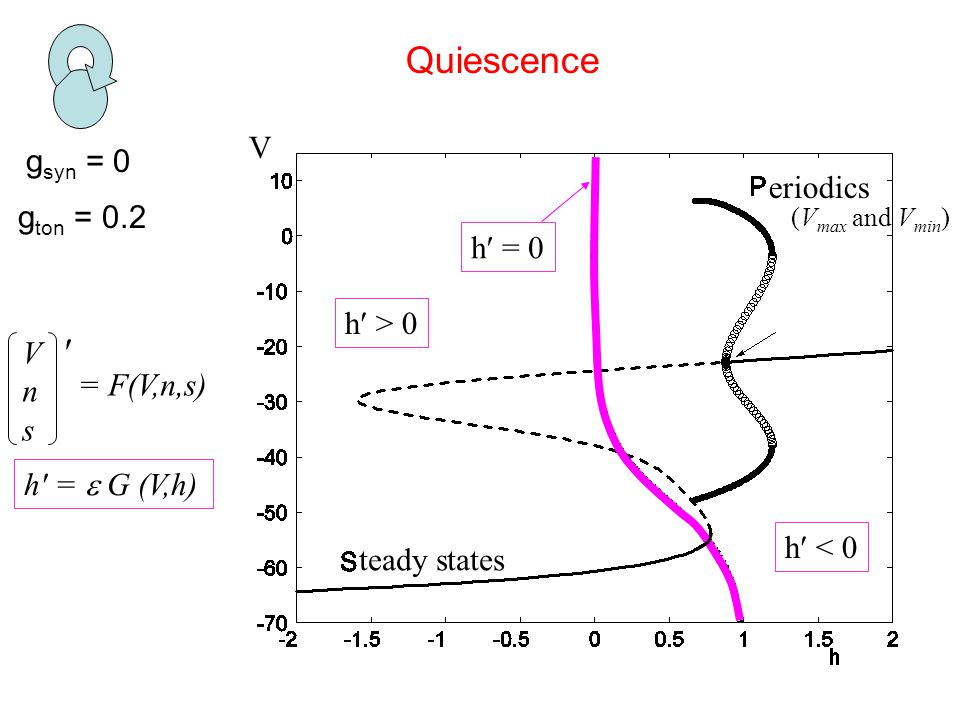 g syn = 0 Quiescence g ton = 0.2 V teady states eriodics h′ = 0 h′ < 0 h′ > 0 (V max and V min ) VnsVns ′ = F(V,n,s) h′ =  G (V,h)