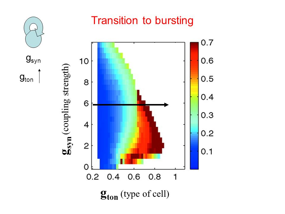 g ton (type of cell) g syn (coupling strength) g syn Transition to bursting g ton