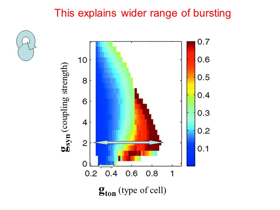 g ton (type of cell) g syn (coupling strength) This explains wider range of bursting