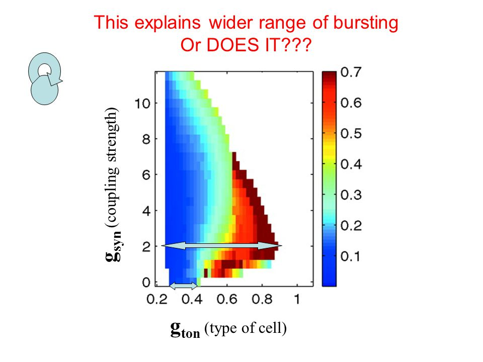 g ton (type of cell) g syn (coupling strength) This explains wider range of bursting Or DOES IT