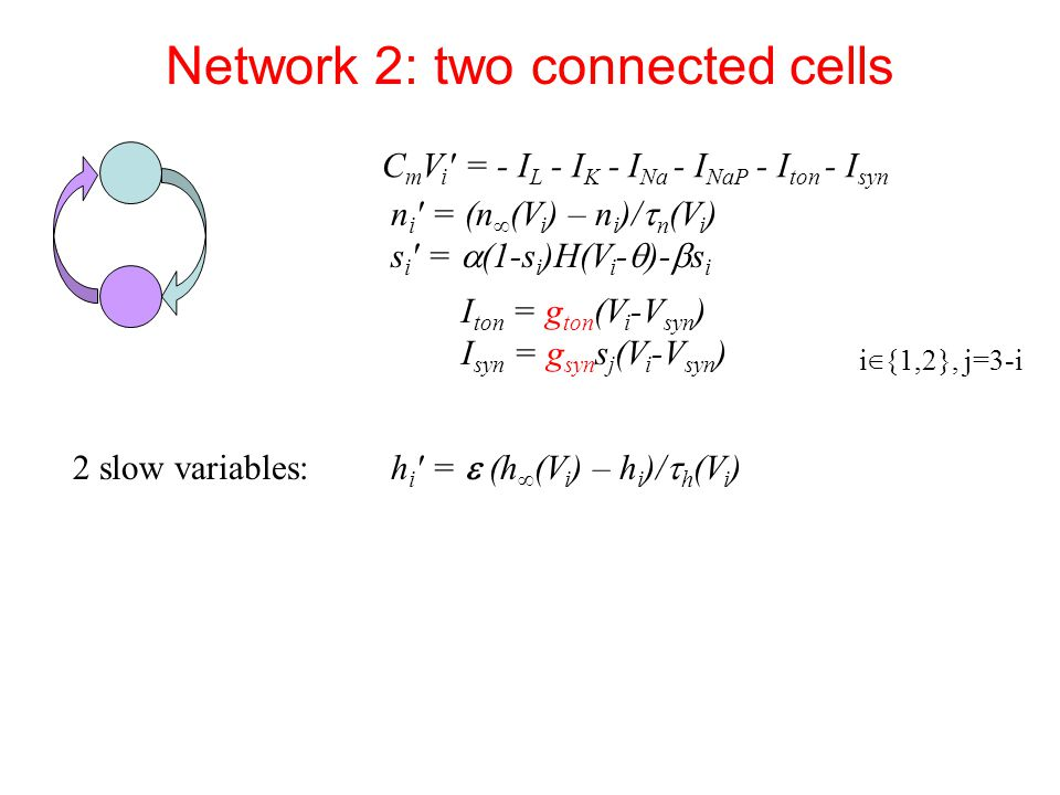 Network 2: two connected cells n i ′ = (n ∞ (V i ) – n i )/  n (V i ) s i ′ =  (1-s i )H(V i -  )-  s i 2 slow variables: h i ′ =  (h ∞ (V i ) – h i )/  h (V i ) C m V i ′ = - I L - I K - I Na - I NaP - I ton - I syn I ton = g ton (V i -V syn ) I syn = g syn s j (V i -V syn ) i ∈ {1,2}, j=3-i