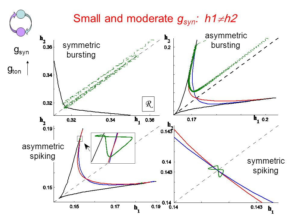 Small and moderate g syn : h1  h2 g syn g ton R symmetric bursting asymmetric bursting asymmetric spiking symmetric spiking