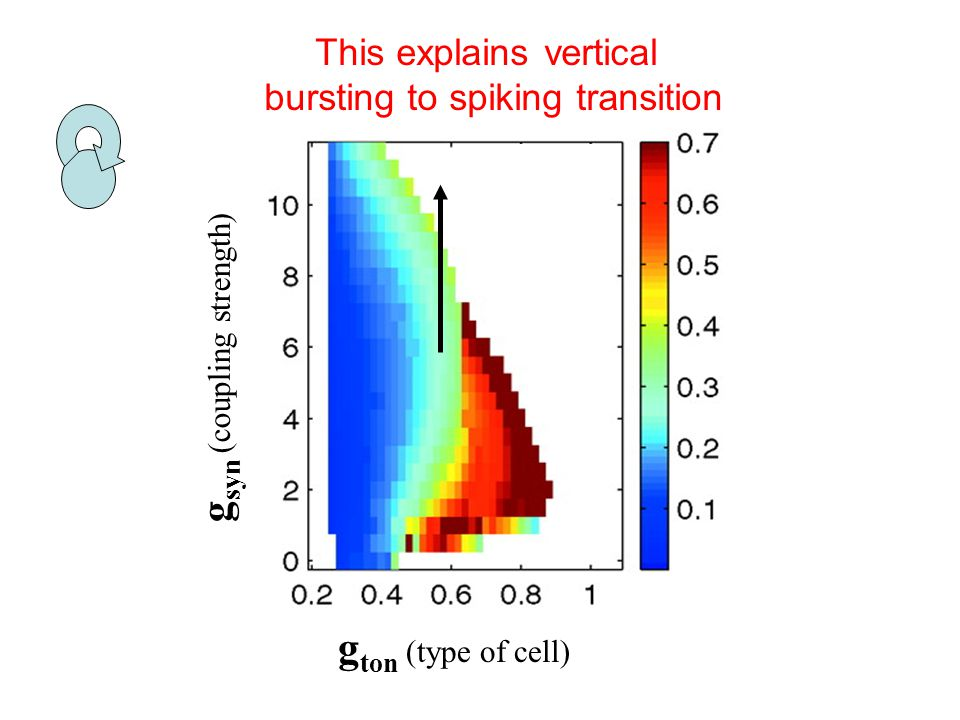 g ton (type of cell) g syn (coupling strength) This explains vertical bursting to spiking transition