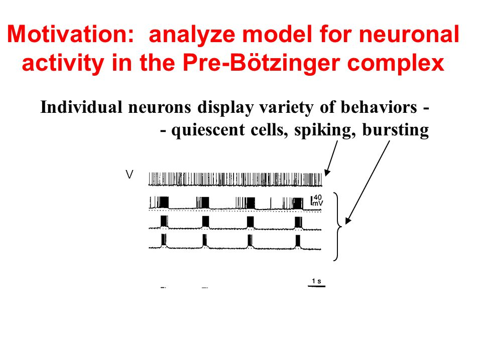 Motivation: analyze model for neuronal activity in the Pre-Bötzinger complex Individual neurons display variety of behaviors - - quiescent cells, spiking, bursting V