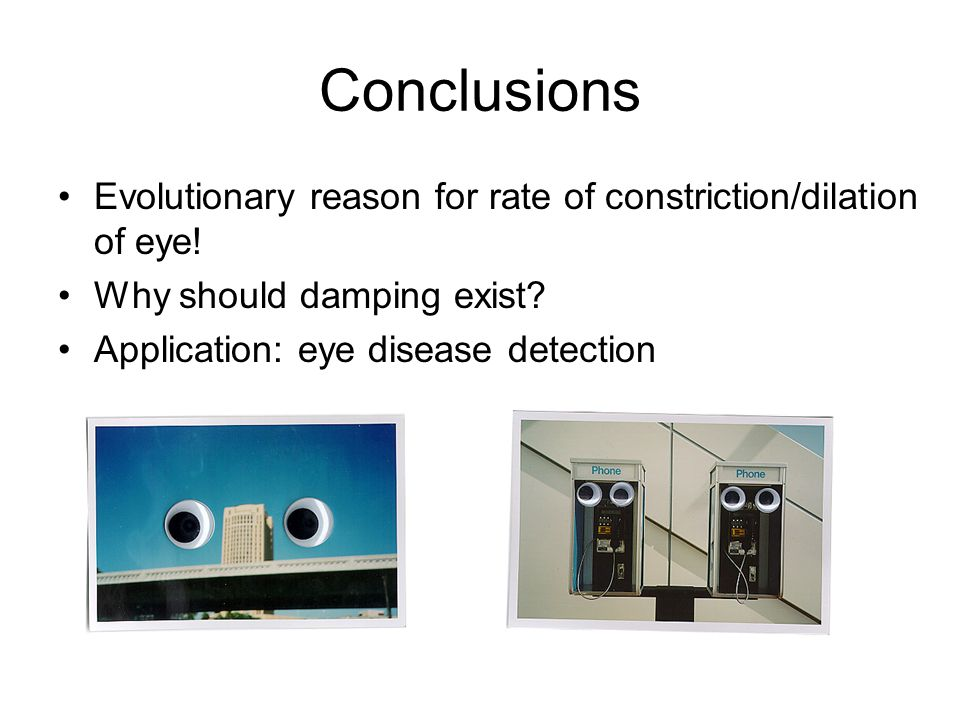 Conclusions Evolutionary reason for rate of constriction/dilation of eye.