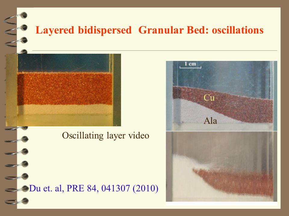 Layered bidispersed Granular Bed: oscillations Du et.