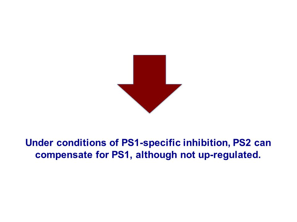 Under conditions of PS1-specific inhibition, PS2 can compensate for PS1, although not up-regulated.