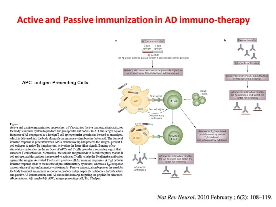 Active and Passive immunization in AD immuno-therapy APC: antigen Presenting Cells