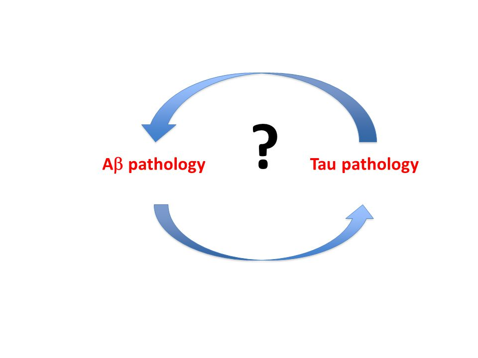 A  pathology Tau pathology