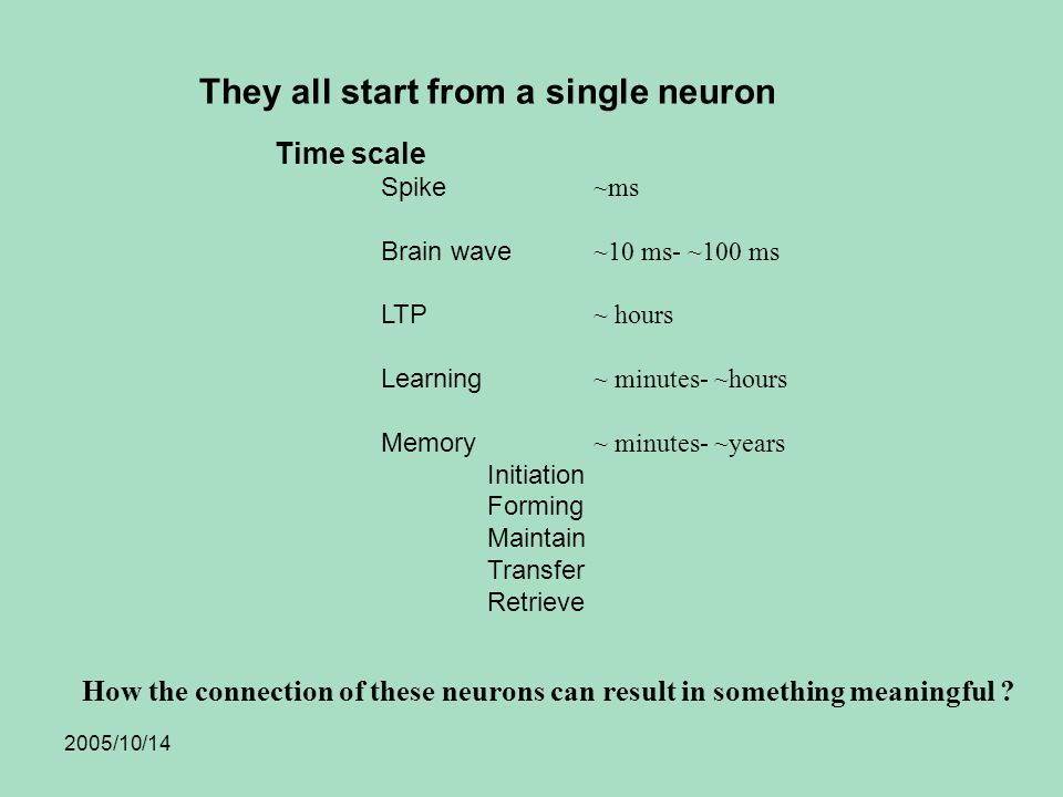 2005/10/14 Time scale Spike ~ms Brain wave ~10 ms- ~100 ms LTP ~ hours Learning ~ minutes- ~hours Memory ~ minutes- ~years Initiation Forming Maintain Transfer Retrieve They all start from a single neuron How the connection of these neurons can result in something meaningful ?