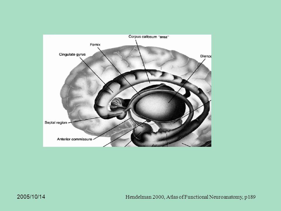 2005/10/14 Hendelman 2000, Atlas of Functional Neuroanatomy, p189