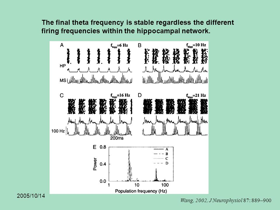 2005/10/14 The final theta frequency is stable regardless the different firing frequencies within the hippocampal network.